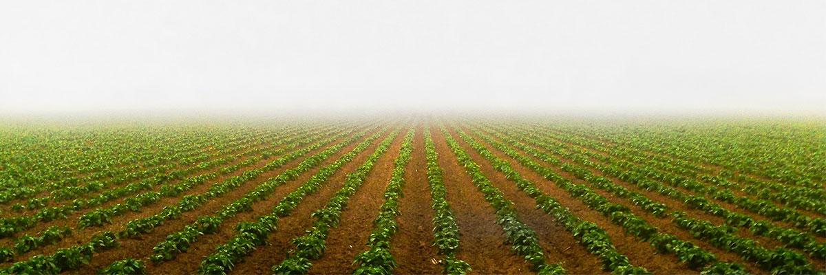 Seguros clima agropercuario