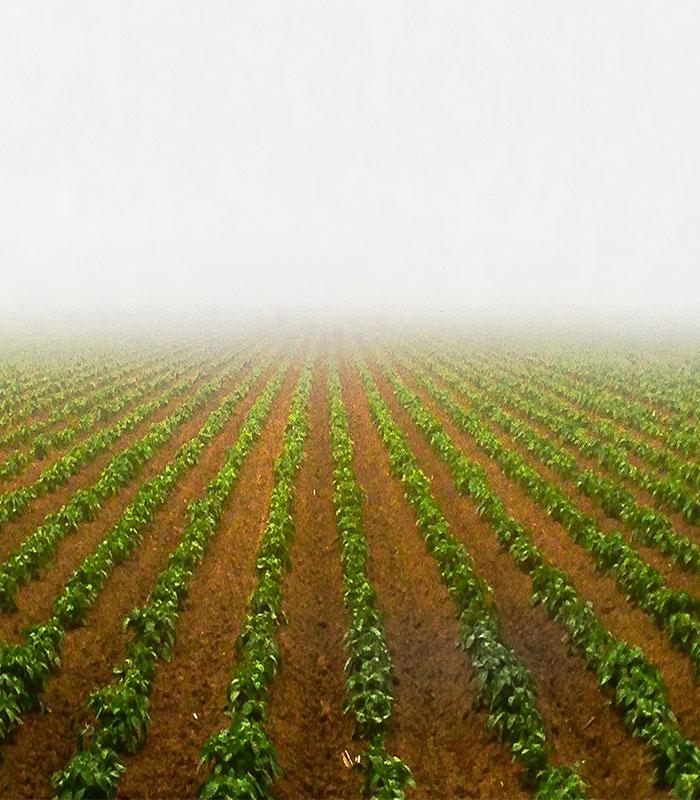 Seguro climático agropecuario